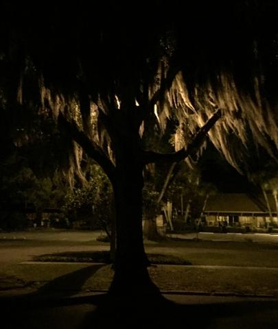 tree 2 IMG_4659 copy