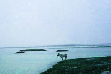 horse-lonely-on-road-to-Canoa-Quebrada-Brazil-grey-sky-lots-of-water-JBG